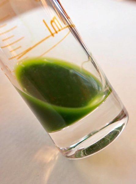 ハコベの青汁